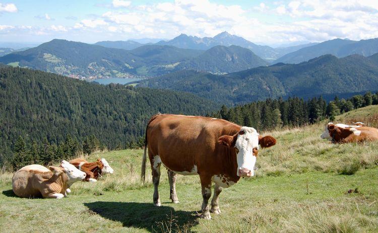 Blick Auf Schliersee Von Der Gindelalm Copyright Alpenregion Tegernsee Schliersee Web